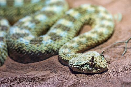 夢占い:蛇(へび・ヘビ)の意味と解釈