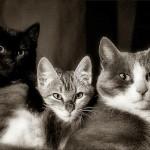 夢占いで猫(ねこ・ネコ)の意味・解釈|わがままなな人にふりまわされる夢?