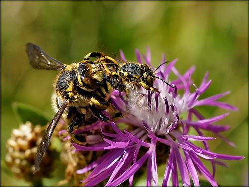 夢占い|蜂にまとめ。あなたが夢でみた蜂は?