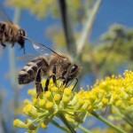 夢にでてきた蜂はどんな蜂?夢占いで蜂が意味すること