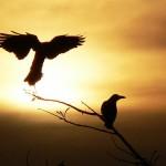夢占いのカラス|夢にカラスが現れたら冷静に、かつ建設的な行動を。