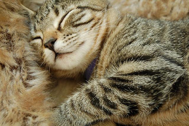 眠れない人におくる|管理人が買った「おすすめ快眠グッズ7選」