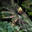 夢占いで蜘蛛の意味/解釈