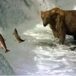 夢占いで熊の意味/解釈は!?母子の関係を暗示します。