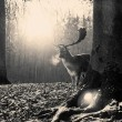 夢占い 鹿