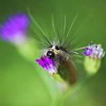 夢占いで毛虫の意味/解釈は?!生理的違和感・不愉快を意味します。