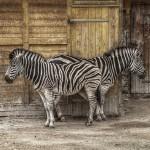 夢占いで動物園の意味/解釈は?!あなたの命の叫びを意味します。
