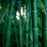 夢占いで竹の意味/解釈は?!まっすぐに伸びた竹は幸運の象徴です。