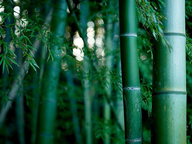 夢占い 竹