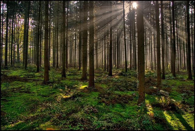 夢占い 森