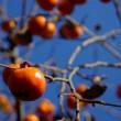 夢占い 柿