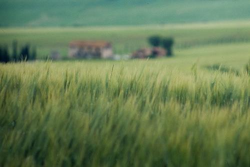 夢占い 草原
