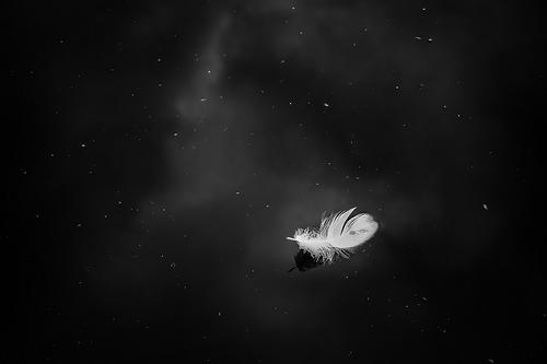 夢占い 羽根 翼