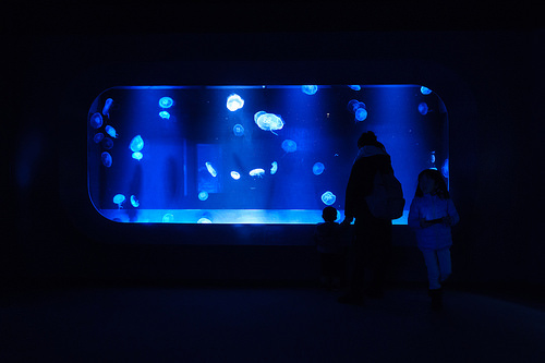 夢占い 水族館