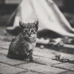 夢占い 子猫