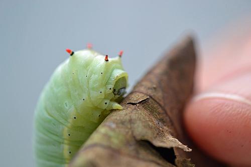 夢占い 幼虫