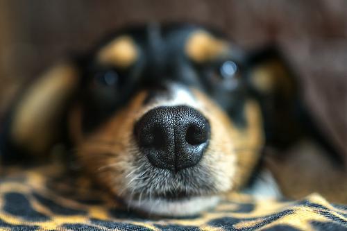 夢占い 犬