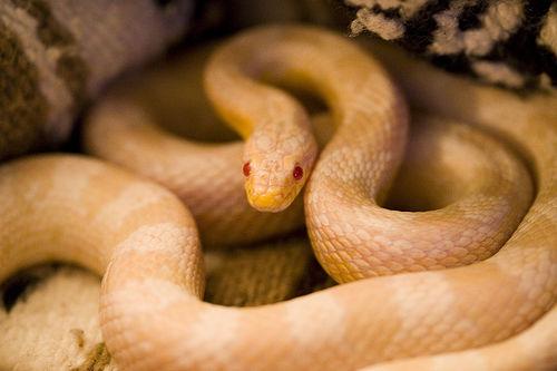 夢占い:白蛇(しろへび・シロヘビ)の意味・解釈