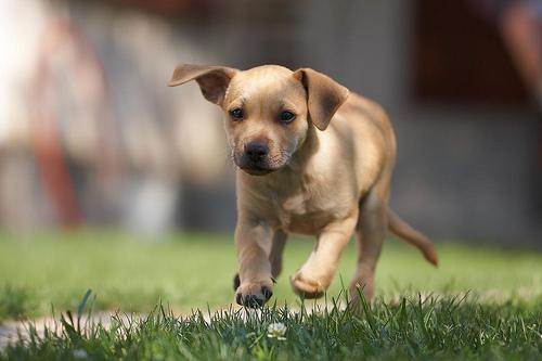夢占いで犬の意味・解釈 29選 | 犬は身近な存在を暗示する夢。