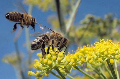【夢占いの蜂】ハチの種類で意味が大違いだった!?