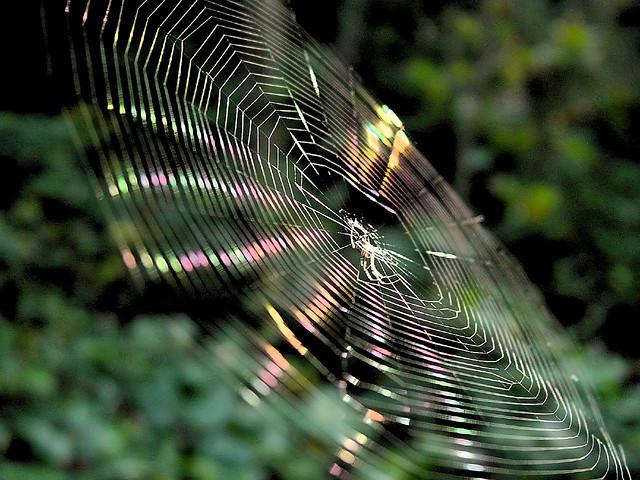夢占いで蜘蛛(クモ/くも)の意味/解釈とは。あなた自身が蜘蛛か?それとも巣にかかってしまったのか?