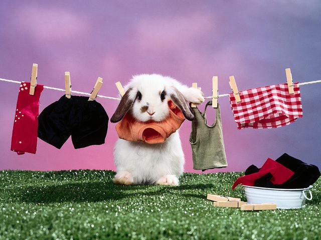夢占いでうさぎ(兎・ウサギ)の夢の意味/診断は?物事の成就や幸運の象徴といわれいます。