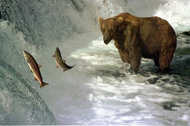 夢占いで熊(クマ)の意味/解釈は!?母子の関係を暗示します。