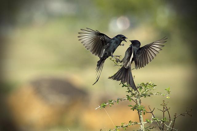 夢占いで鳥の意味/解釈は!?魂や心を表しますが、種類によっても解釈が異なります。