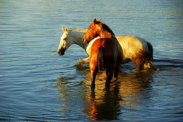 夢占いで馬の意味/解釈は?自分を乗せて運ぶ運命の力を象徴します。