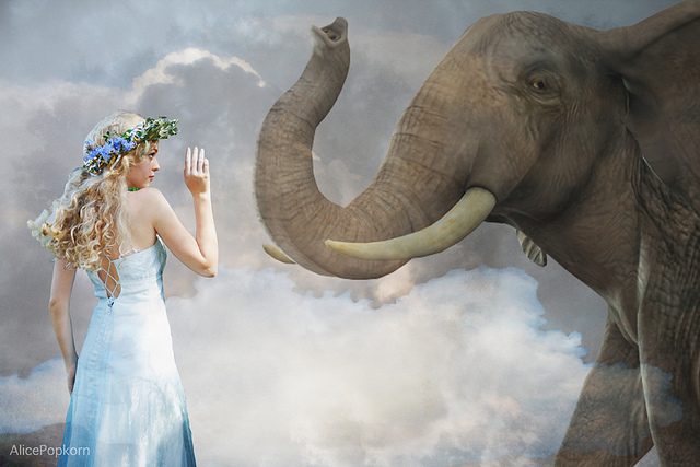 夢占いで象(ぞう・ゾウ)の意味/解釈は?!勇気やエネルギーを暗示します。