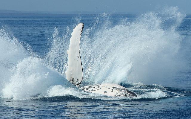 夢占いで鯨(クジラ・くじら)の意味/解釈は?!大洋を泳ぐくじらは大吉夢です!