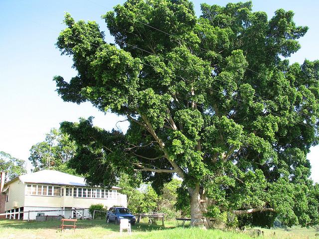 夢占いで木の意味/解釈は?!その人の心や体の全体像を表しています。