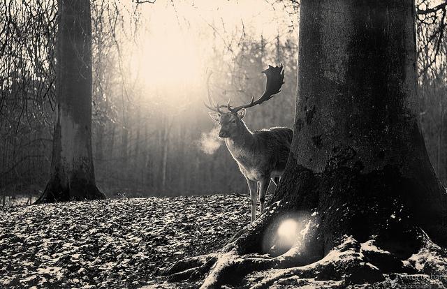 夢占いで鹿の意味/解釈は!?鹿は吉祥、喜び事の象徴です。