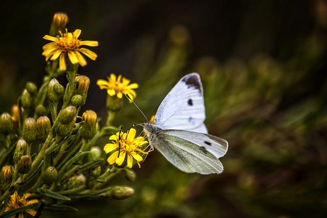 夢占いで蝶の意味/解釈は?人間関係の象徴であり、霊的な意味をも持ちます。