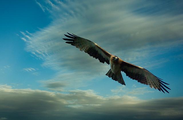 夢占い 鷹