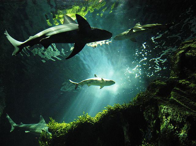 夢占いでサメは心身の安定の必要性を表しています。