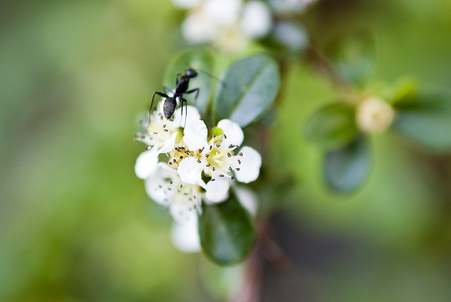 夢占いで蟻(アリ・あり)の意味/解釈は?!秘めたエネルギーを暗示します。
