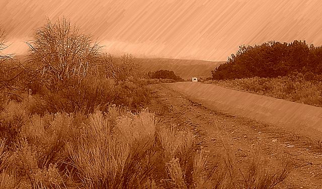 夢占いで草・雑草の意味/解釈は?!成長やたくましさを意味します。
