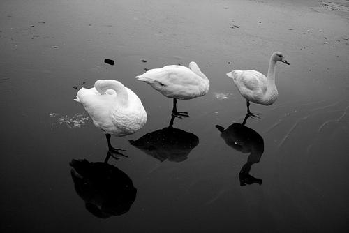 夢占いで氷の意味/解釈は?!あなたの冷えきった心情をあらわします。