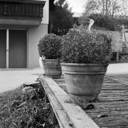 夢占いで植木・植木鉢の意味とは成長していく姿を表わしています