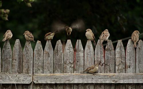 夢占いで雀の意味/解釈は?!思わぬチャンスを表わしています。