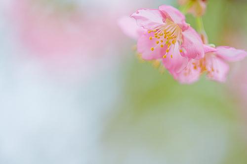 夢占いで春の意味/解釈は?!いい方への変化を表わしています。