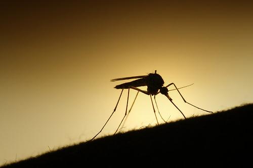夢占い 蚊