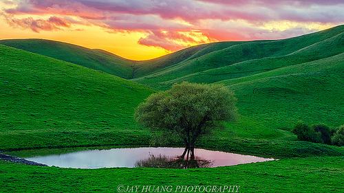 夢占いで緑の意味/解釈は?!成長や心の安定を表しています。