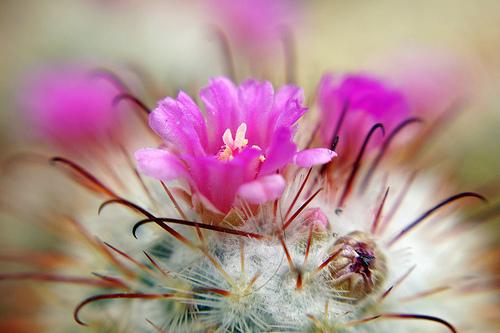 夢占いでサボテンの意味/解釈は?!生命力、人間関係を暗示しています。