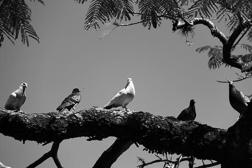夢占いで鳩の意味/解釈は?!穏やかさの表れです。