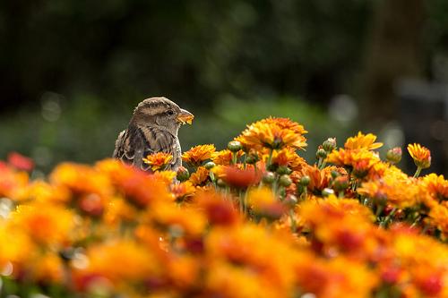夢占いで小鳥の意味/解釈は?!恋愛の行方を表しています。