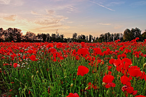 夢占いで花畑の意味/解釈は?!愛情や才能を暗示しています。