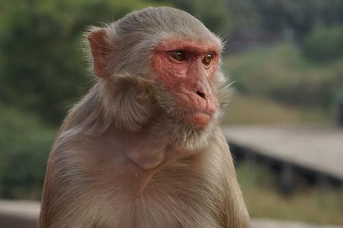 深層心理:サル